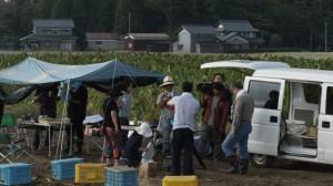 里芋畑にテントを張っていただきました